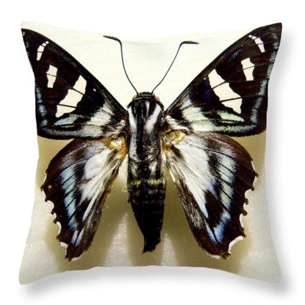 Black And White Moth Throw Pillow by Rosalie Scanlon
