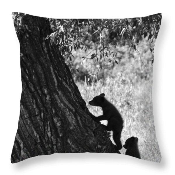 Black Bear Cubs Climbing A Tree Throw Pillow by Crystal Wightman