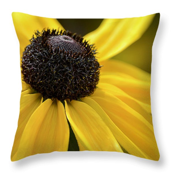 Black Eyed Susan Throw Pillow by Julie Palencia