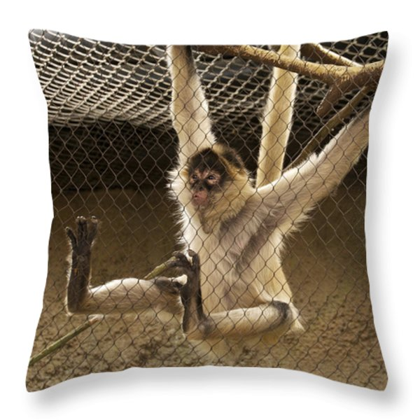 Black Handed Spider Monkey Just Sitting Around Throw Pillow by Thomas Woolworth