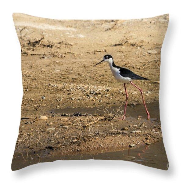 Black-necked Stilt Throw Pillow by Robert Bales