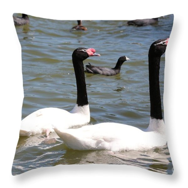 Black-necked Swans Throw Pillow by Carol Groenen