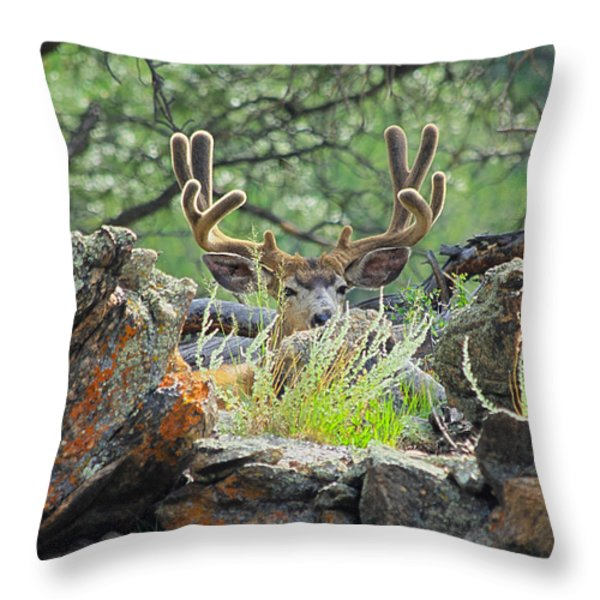 Blending In Throw Pillow by Shane Bechler