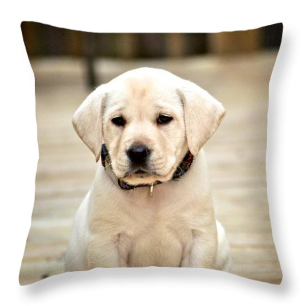 Blond Lab Pup Throw Pillow by Kristina Deane