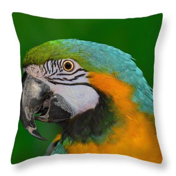 Blue And Gold Macaw Throw Pillow by Tony Beck