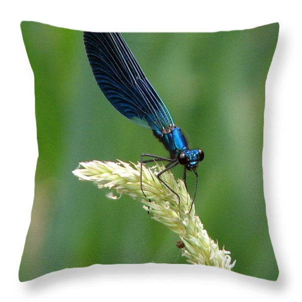 Blue Damselfly Throw Pillow by Ramona Johnston