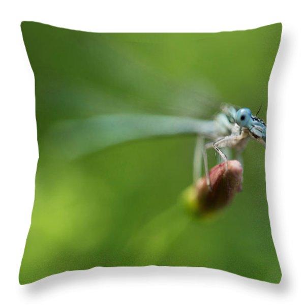 Blue Dragonfly Throw Pillow by Jaroslaw Blaminsky