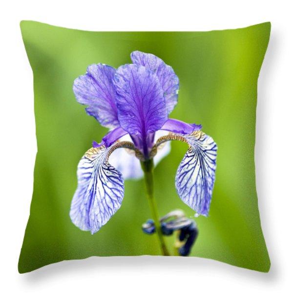 Blue Iris Throw Pillow by Frank Tschakert