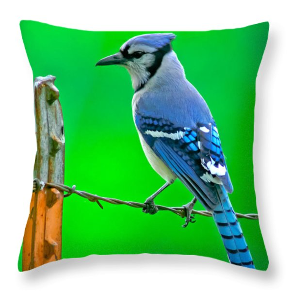 Blue Jay On The Fence Throw Pillow by Robert Frederick