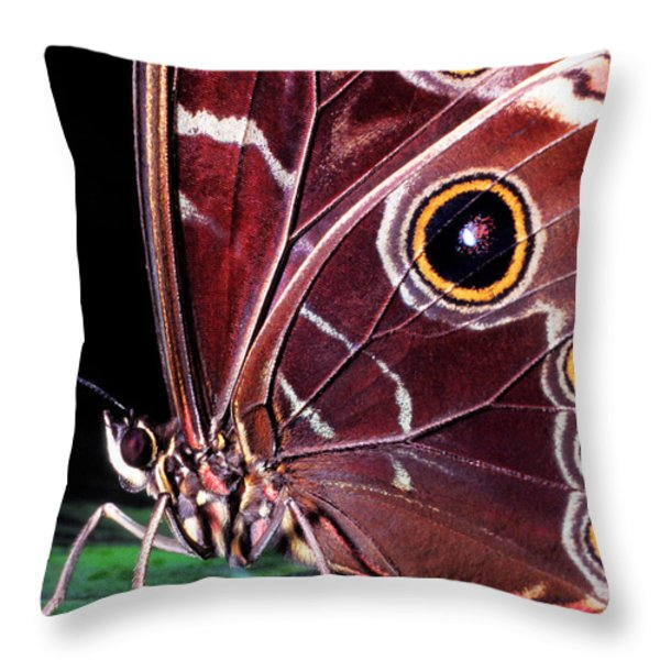 Blue Morpho Butterfly Throw Pillow by Thomas R Fletcher