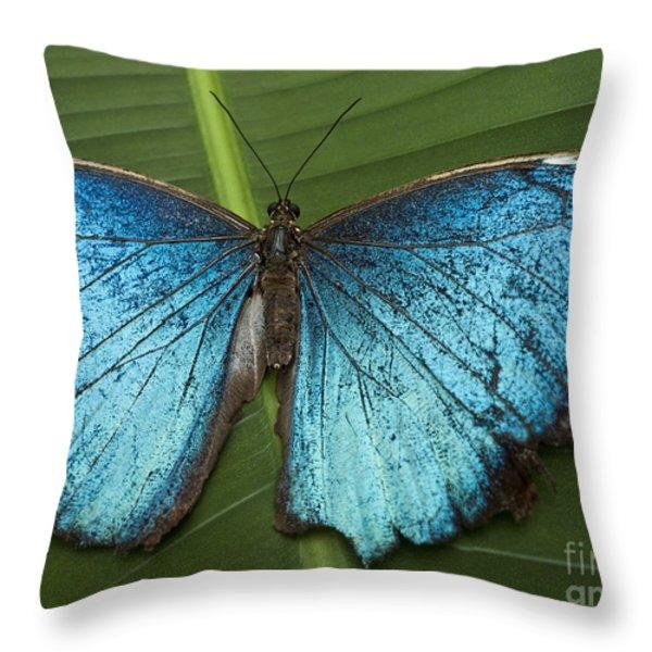 Blue Morpho - Morpho Peleides Throw Pillow by Heiko Koehrer-Wagner