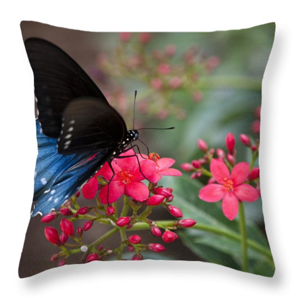 Blue Swallowtail Butterfly  Throw Pillow by Saija  Lehtonen