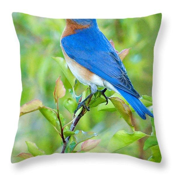 Bluebird Joy Throw Pillow by William Jobes