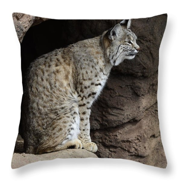 Bobcat Throw Pillow by Bob Christopher