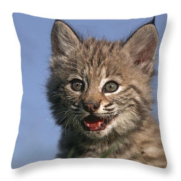 Bobcat Kitten Throw Pillow by Tim Fitzharris