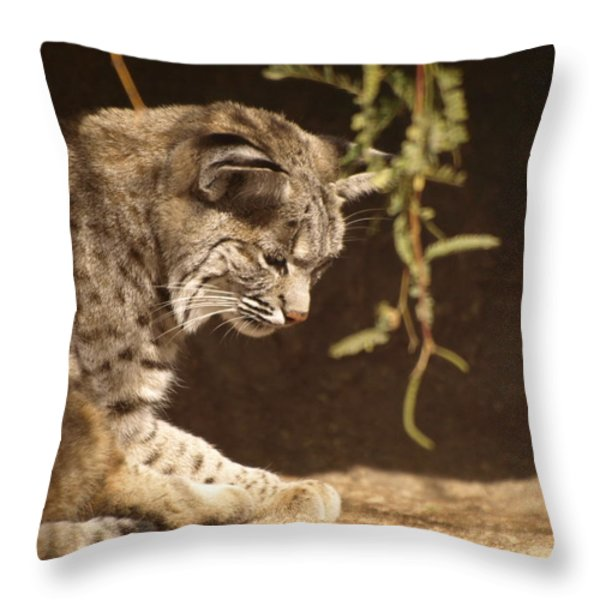 Bobcat Throw Pillow by James Peterson