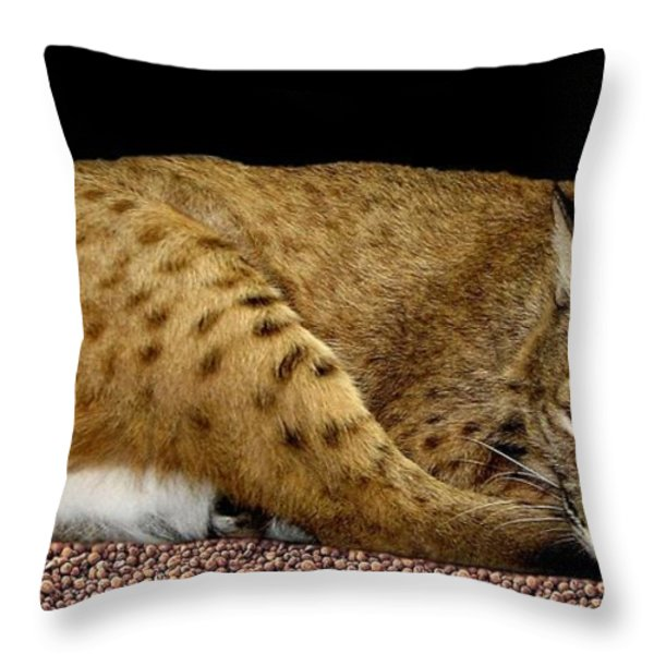 Bobcat Throw Pillow by Rose Santuci-Sofranko