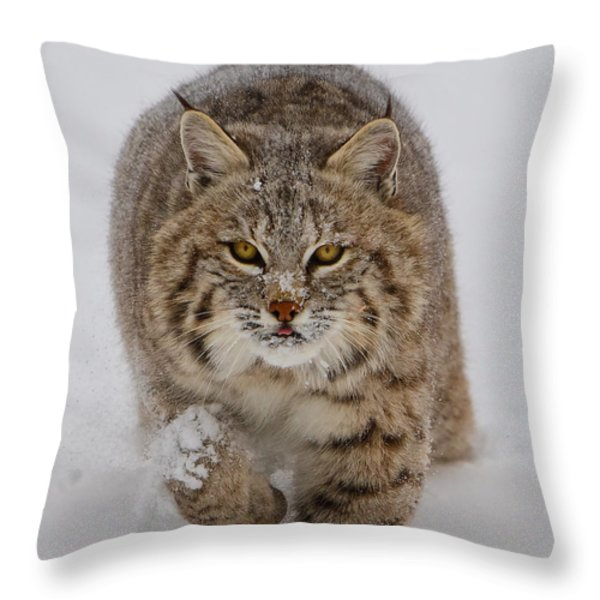 Bobcat Running Forward Throw Pillow by Jerry Fornarotto