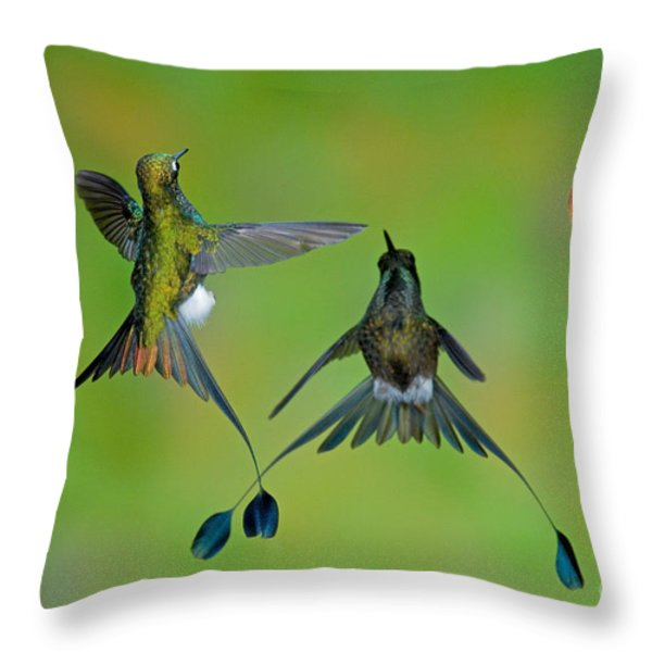 Booted Racket-tail Hummingbird Males Throw Pillow by Anthony Mercieca