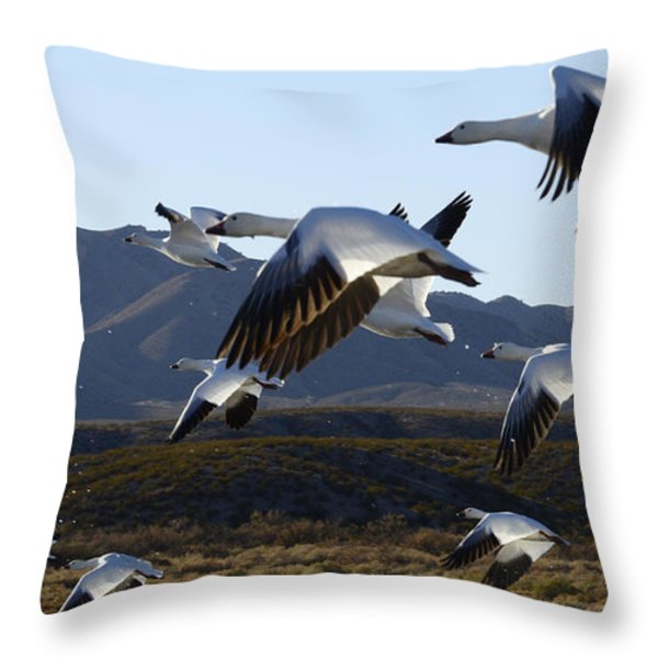 Bosque Del Apache Snow Geese In Flight Throw Pillow by Bob Christopher