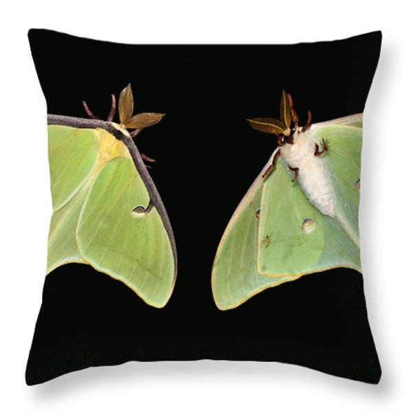 Both Sides Now Throw Pillow by Kristin Elmquist