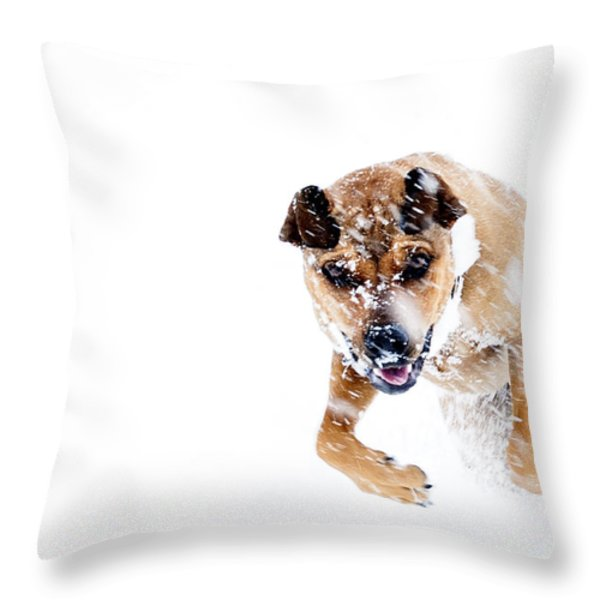 Bounding In Snow Throw Pillow by Thomas R Fletcher