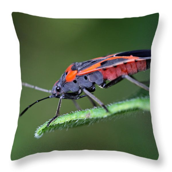 Boxelder Bug Throw Pillow by Juergen Roth