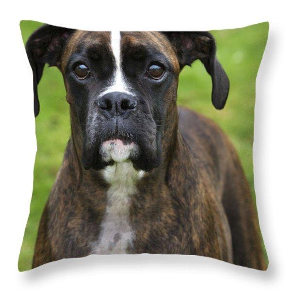 Boxer Dog Throw Pillow by Johan De Meester