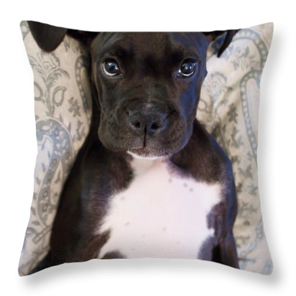 Boxer Puppy Laying in Bed Throw Pillow by Stephanie McDowell