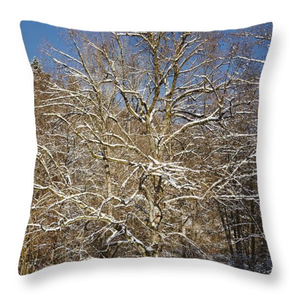 Break Under A Large Tree - Sunny Winter Day Throw Pillow by Matthias Hauser