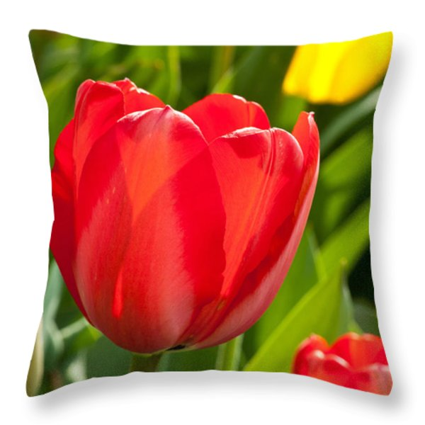 Bright Red Tulip Throw Pillow by Karol Livote
