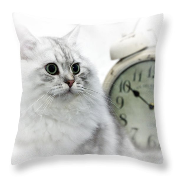 British Longhair Cat Time Goes By II Throw Pillow by Melanie Viola