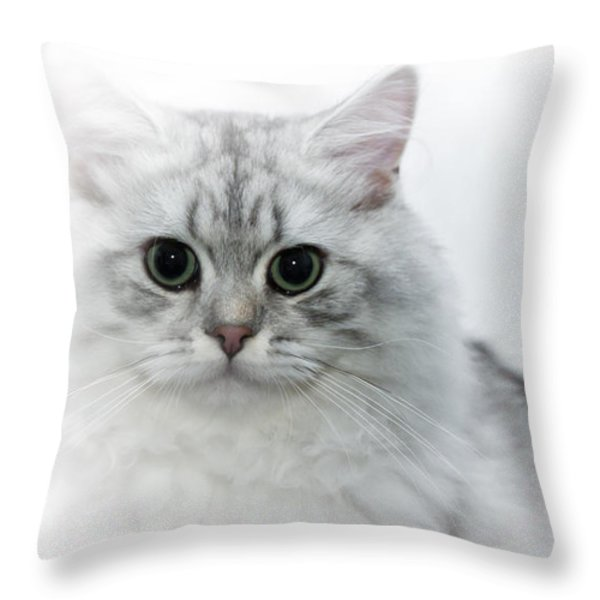 British Longhair Cat Time Goes By Throw Pillow by Melanie Viola