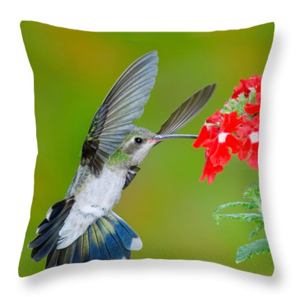 Broad-billed Hummingbird Throw Pillow by Anthony Mercieca