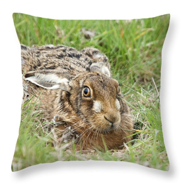 Brown Hare Throw Pillow by Philip Pound
