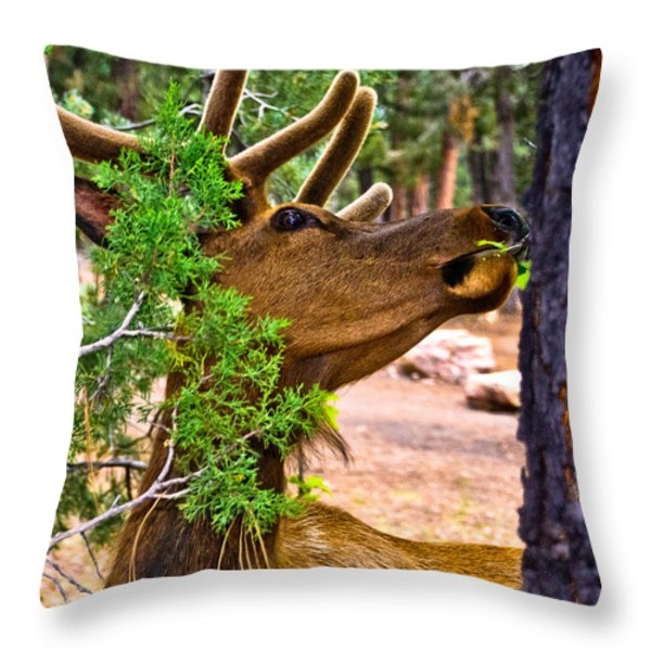 Browsing Red Deer In The Grand Canyon Throw Pillow by Bob and Nadine Johnston