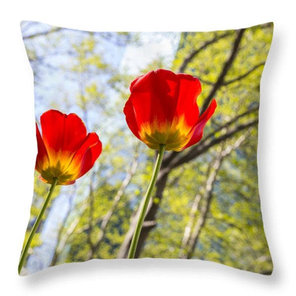 Bryant Park Tulips New York  Throw Pillow by Angela A Stanton