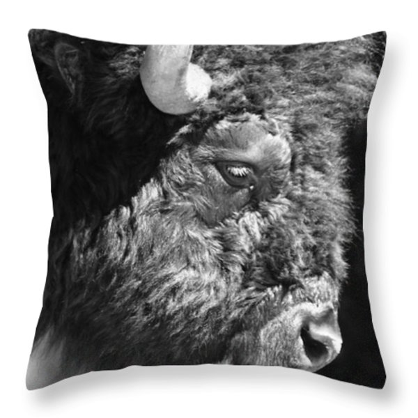 Buffalo Portrait Throw Pillow by Robert Frederick