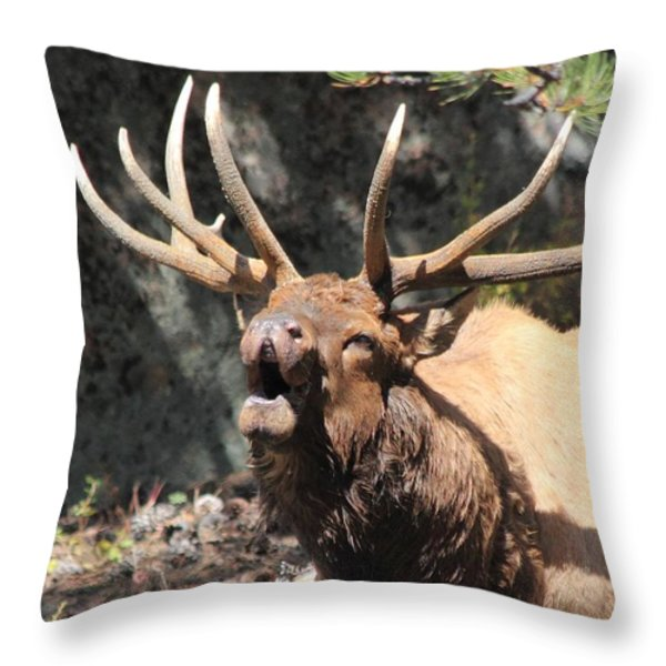 Bugling Bull Throw Pillow by Shane Bechler