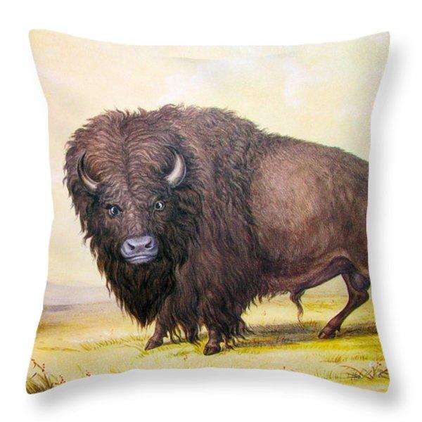 Bull Buffalo Throw Pillow by George Catlin