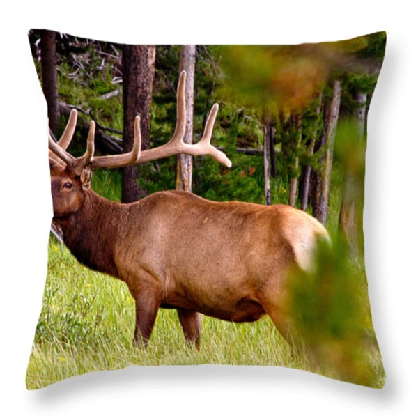 Bull Elk Throw Pillow by Bill Gallagher