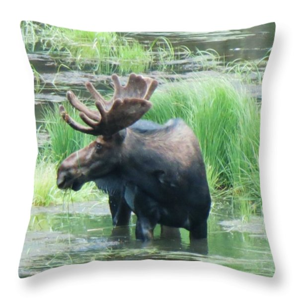 Bull Moose In The Wild Throw Pillow by Feva  Fotos