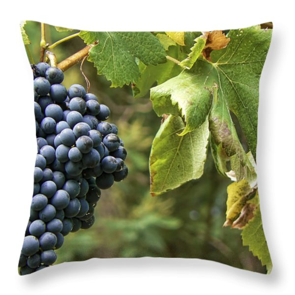 Bunch Of Grapes Throw Pillow by Paulo Goncalves