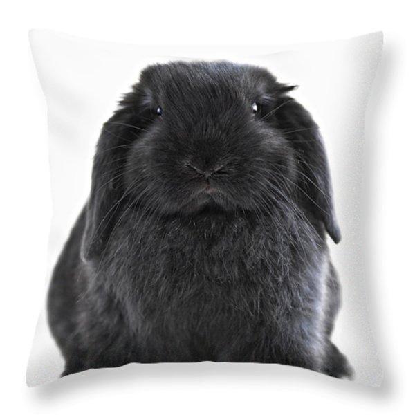 Bunny rabbit Throw Pillow by Elena Elisseeva