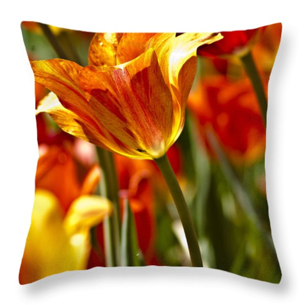 Tulips-Flowers-Tulips Burning Throw Pillow by Matthew Miller