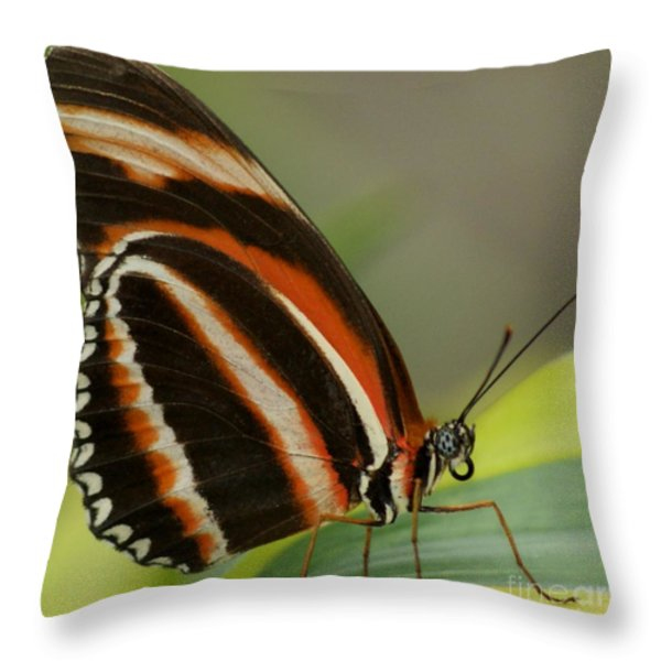 Butterfly Autumn With Green Head Throw Pillow by Gail Matthews