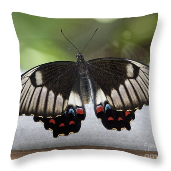 Butterfly Throw Pillow by Steven Ralser