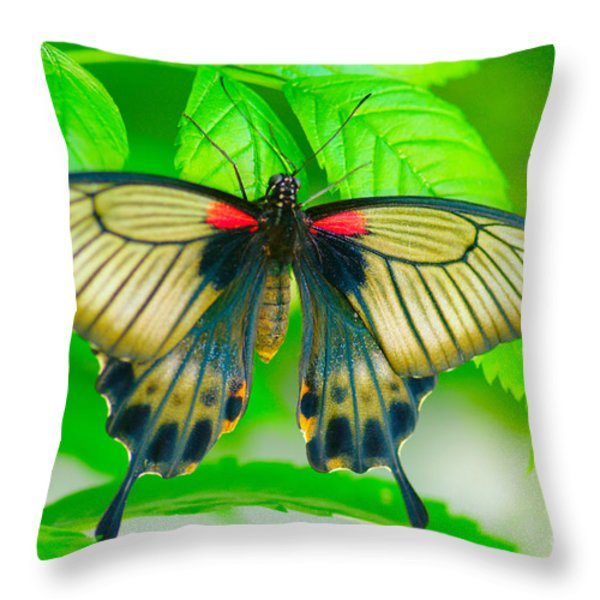 Butterfly Study #0064 Throw Pillow by Floyd Menezes