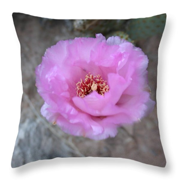 Cactus Flower Throw Pillow by Crystal Magee