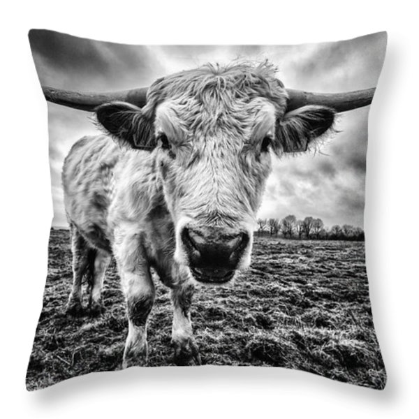 Cadzow White Cow Female Throw Pillow by John Farnan